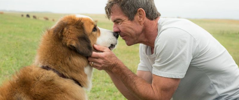 HT-A-Dogs-Purpose-Dennis-Quaid-MEM-170123_12x5_1600.jpg
